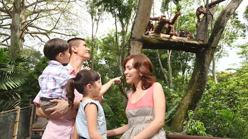 Family looking at the orangutang exhibit at the Singapore zoo