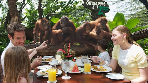 orangutangs watching a family eat at a picnic table at the Singapore zoo