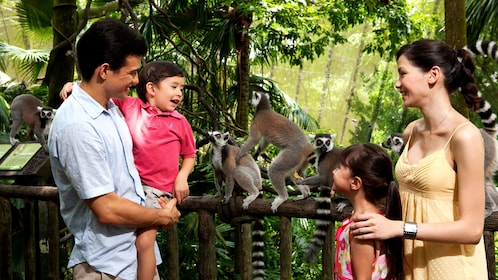Family looking at lemurs at wildlife reserves in Singapore