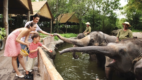 People feeding the elephants at the Singapore zoo