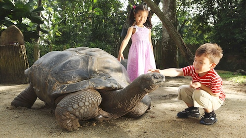 Small children touching a giant tortoise at the wildlife reserve in singapore