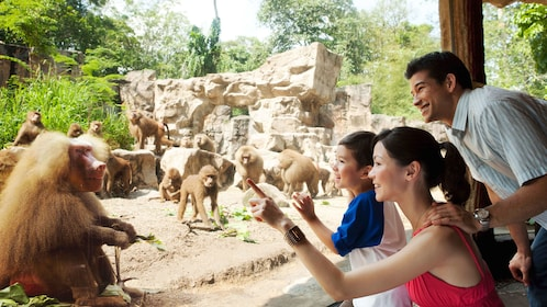 family looking at baboons at the wildlife reserve in singapore