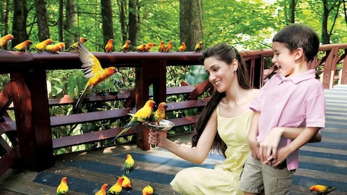 woman and child feeding birds in wildlife reserver in singapore