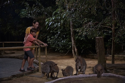 Night Safari - Wallaby Trail.jpg