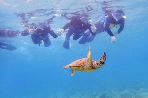 Sea Turtle Snorkelling