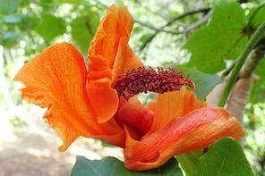 Limahuli Garden Self-Guided Tour