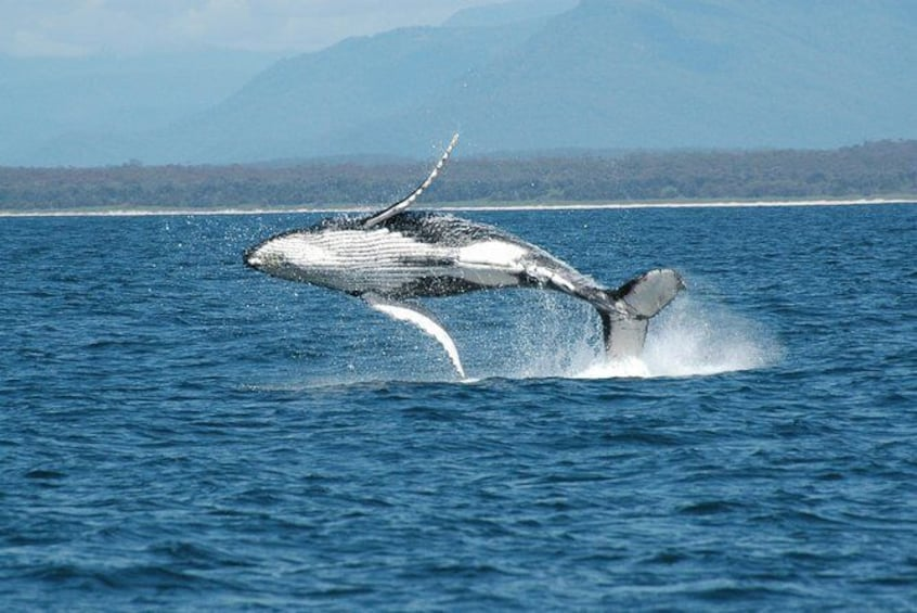 Show item 6 of 6. Coffs Harbour Whale Watch Experience
