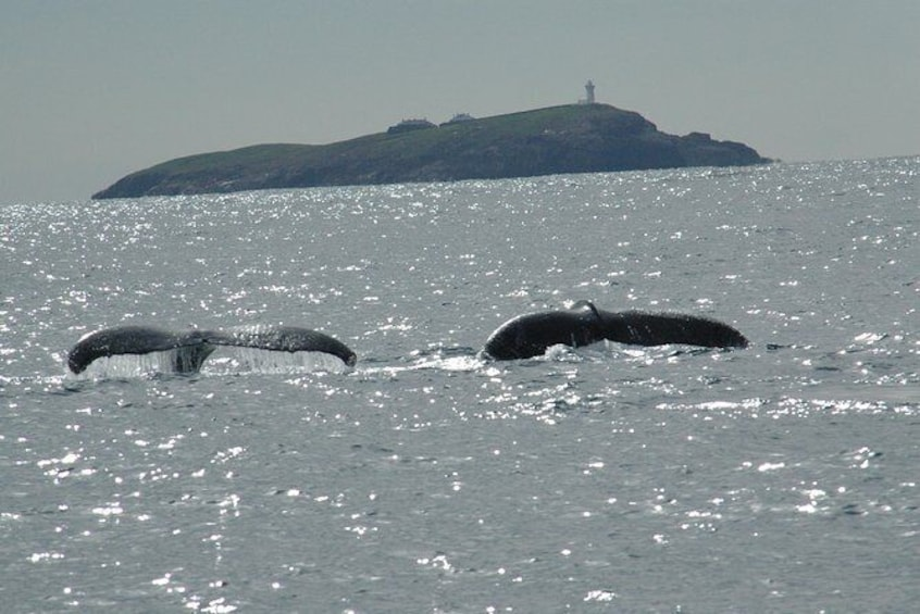 Show item 3 of 6. Coffs Harbour Whale Watch Experience