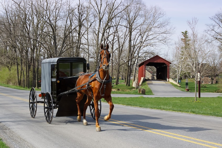 Show item 1 of 5. New York to Amish Country Private Day Trip