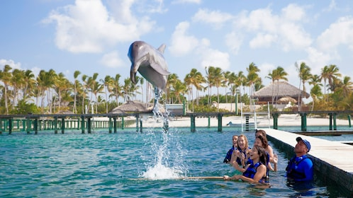 Dolphin jumping in front of a small group in La Romana