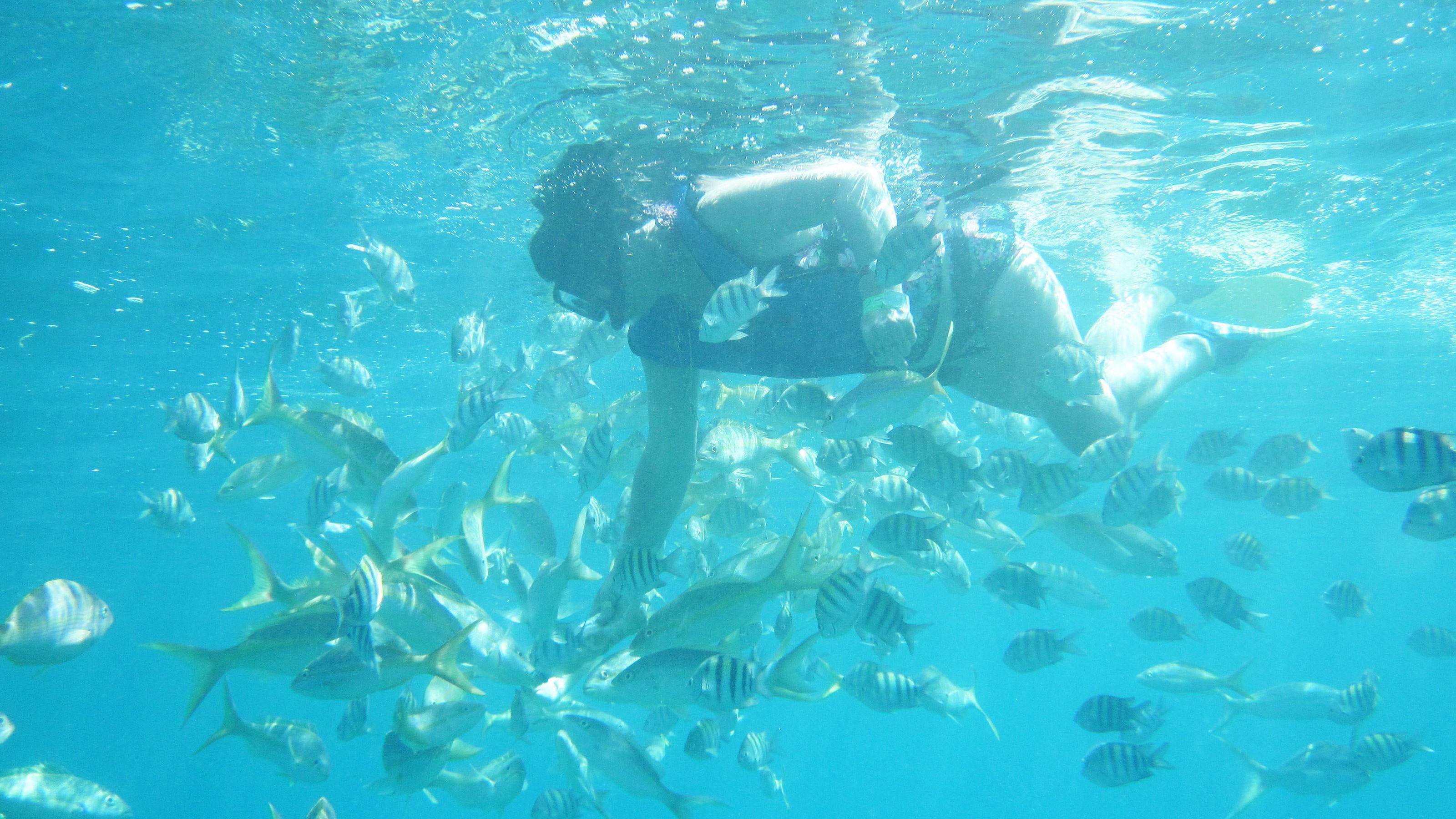 Snorkeling among tropical fish off the coast of Paradise Island