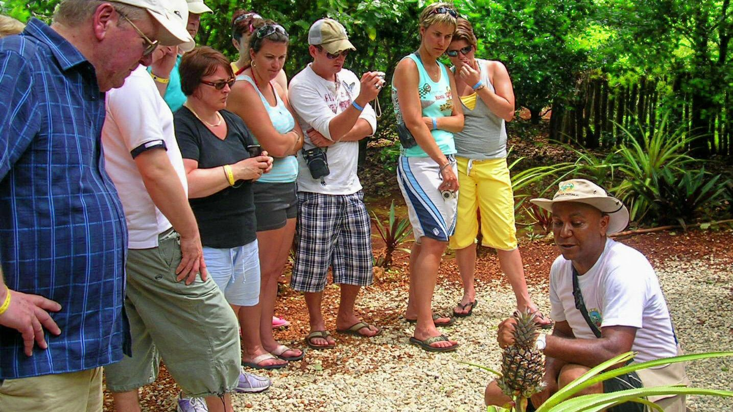 Guide explaining pineapple plant to group of activity-goers
