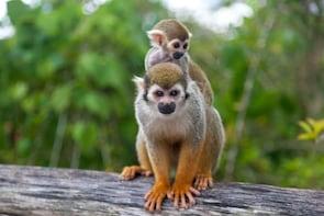 Zipline Adventure & Monkey Jungle - Half-Day Tour