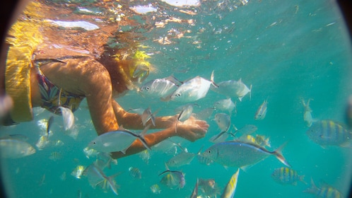 girl snorkeling amongst many colorful fish in Santo Domingo