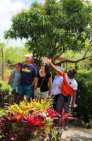Outback Adventures+ Excursion Punta Cana-5433.jpg
