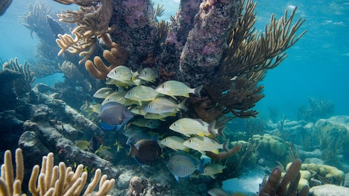Colorful fish and coral reef in Riviera Maya