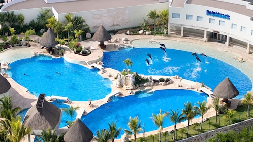 Aerial view of pools with dolphins at Dolphinaris Cancun