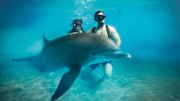 Nade con delfines en Dolphinaris Cozumel