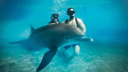 Snuba diving couple with dolphin in Cozumel
