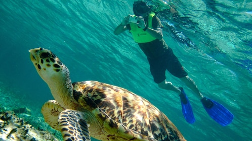 Snuba diving man taking a picture of a sea turtle in Cozumel