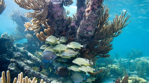 Colorful fish and coral reef in Cozumel