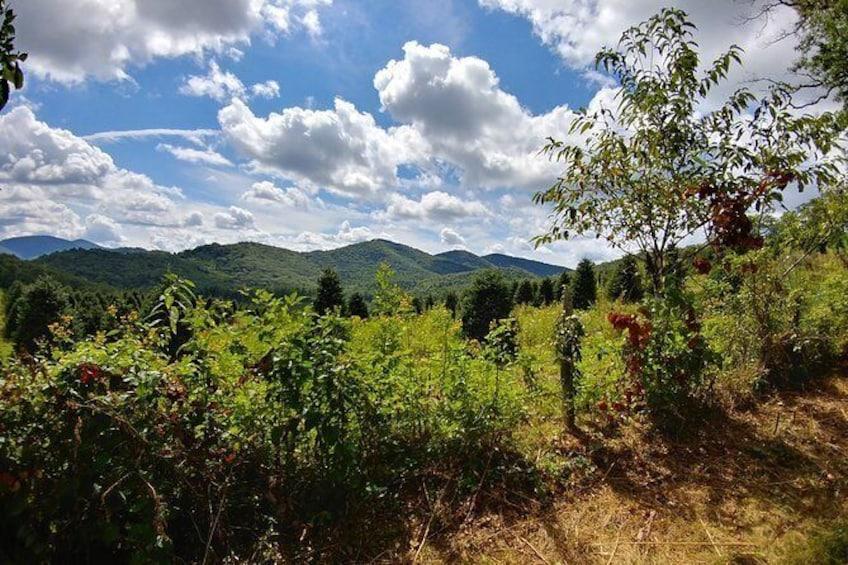 Show item 5 of 9. Flame Azalea and Fern Forest Combo Horseback Trail Ride