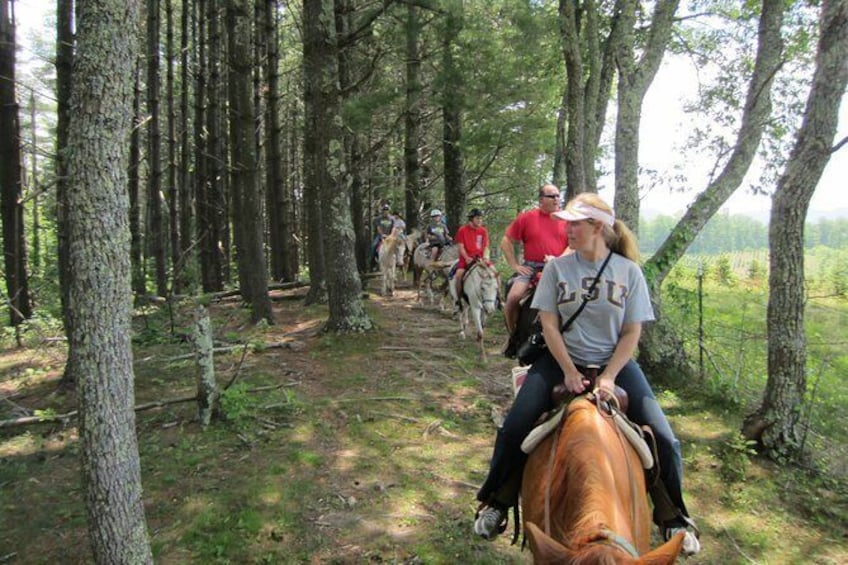 Show item 1 of 9. Flame Azalea and Fern Forest Combo Horseback Trail Ride