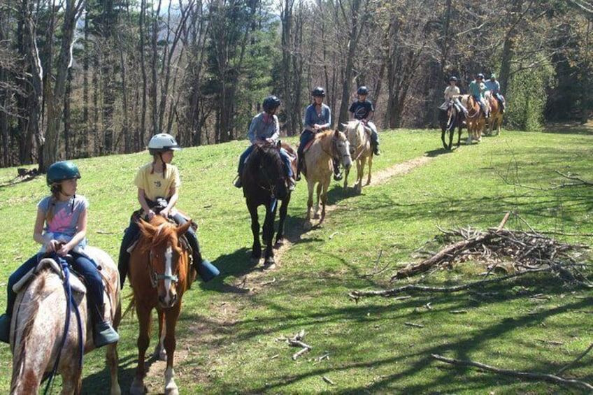 Show item 4 of 9. Flame Azalea and Fern Forest Combo Horseback Trail Ride