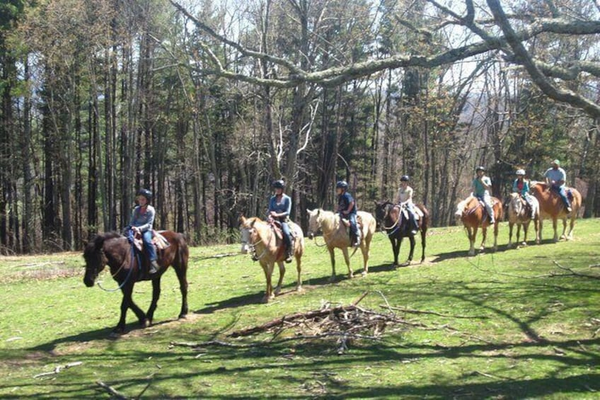 Show item 2 of 9. Flame Azalea and Fern Forest Combo Horseback Trail Ride