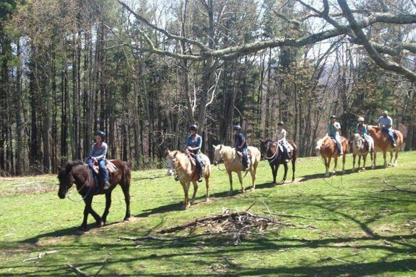 Show item 3 of 9. Flame Azalea and Fern Forest Combo Horseback Trail Ride