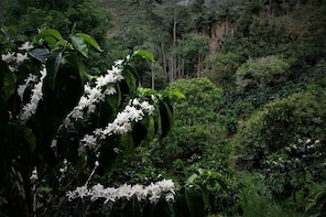 Permaculture and Traditional Coffee Tour at Momota Salento