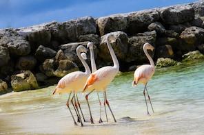 De Palm Island-eventyr med alt inkludert
