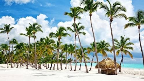 Palm trees and hut on beach in Bahamas