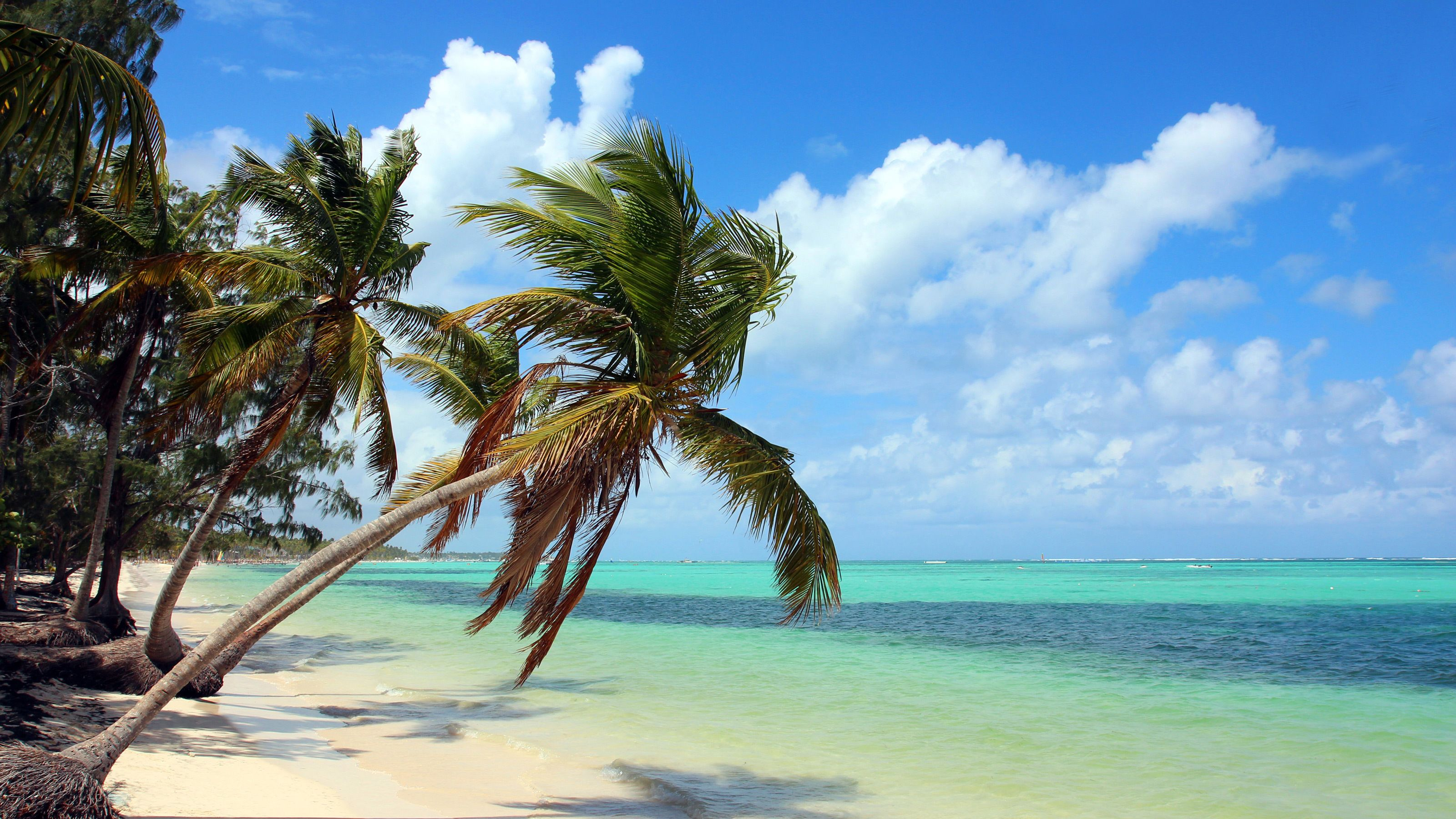 Palm trees on beach in Bahamas