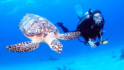 Scuba diving with a turtle in the bahamas