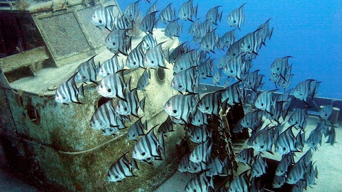 school of striped fish in bahamas