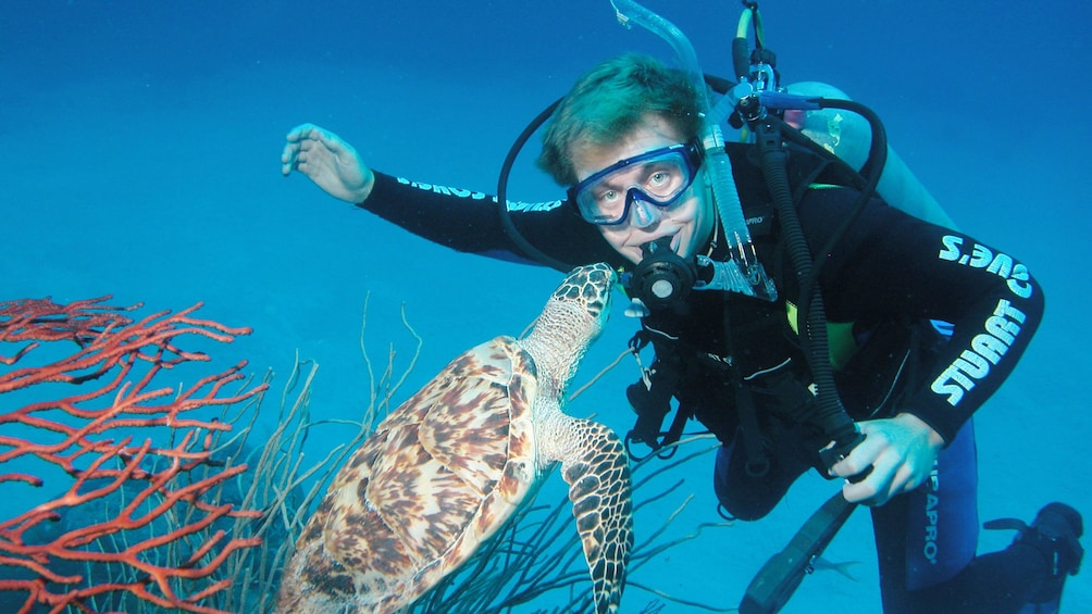 Show item 2 of 9. Scuba diver in water with turtle in Bahamas
