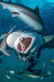 Shark Dive Adventure