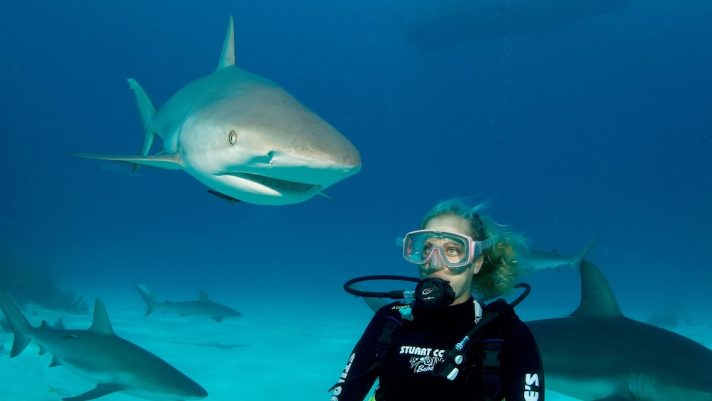 Show item 2 of 9. Sharks on Dive adventure in Bahamas