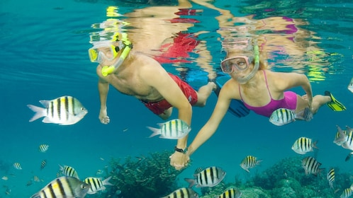 Snorkelers in water in bahamas