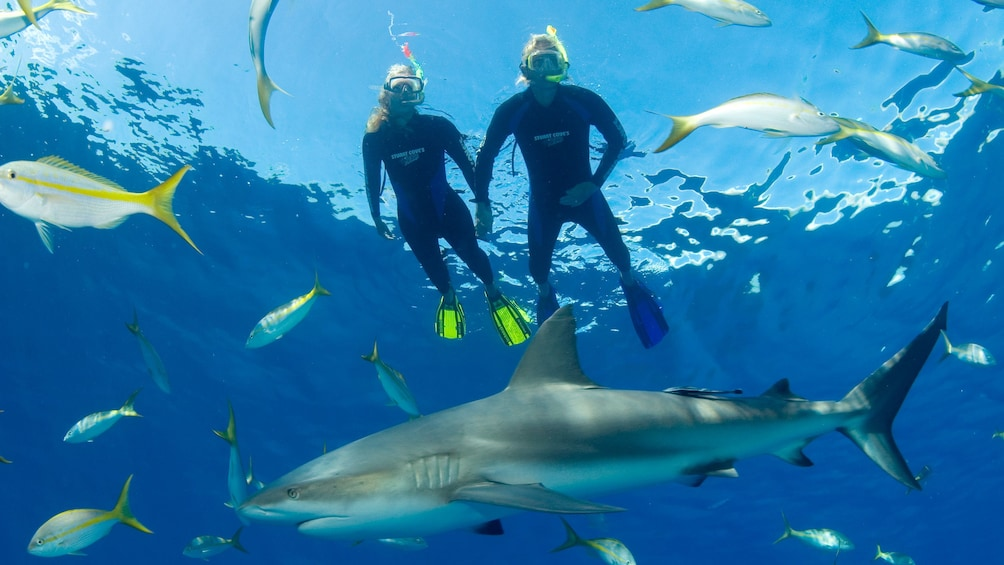Show item 3 of 8. Snorkelers in water with fish and shark in bahamas