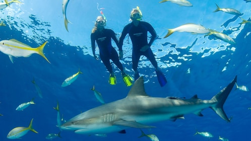 Snorkelers in water with fish and shark in bahamas