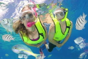 Snorkeling Adventure in Bahamas with Tropical Reefs & Sharks