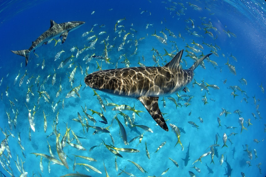 Show item 5 of 8. Snorkeling Excursion, Tropical Reefs & Sharks!