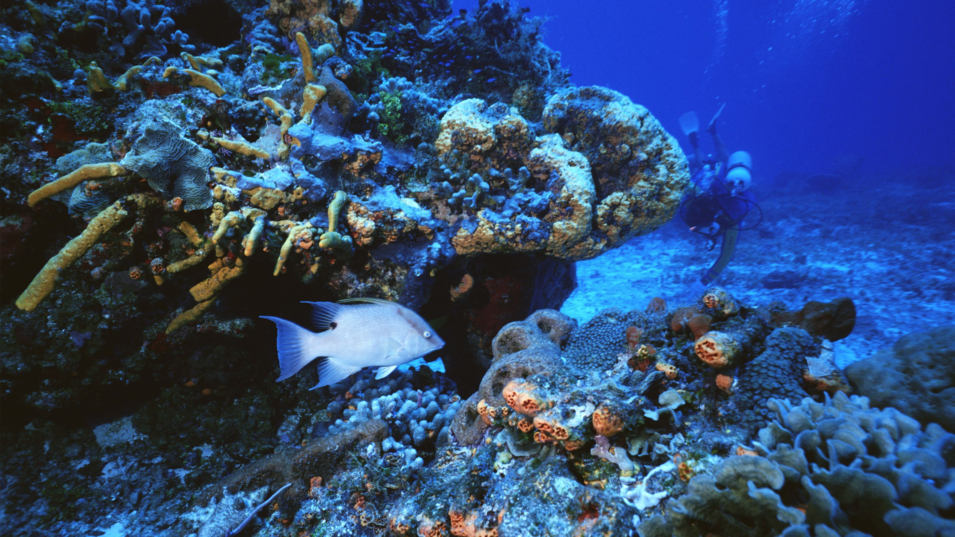 underwater scene with fish in bahamas