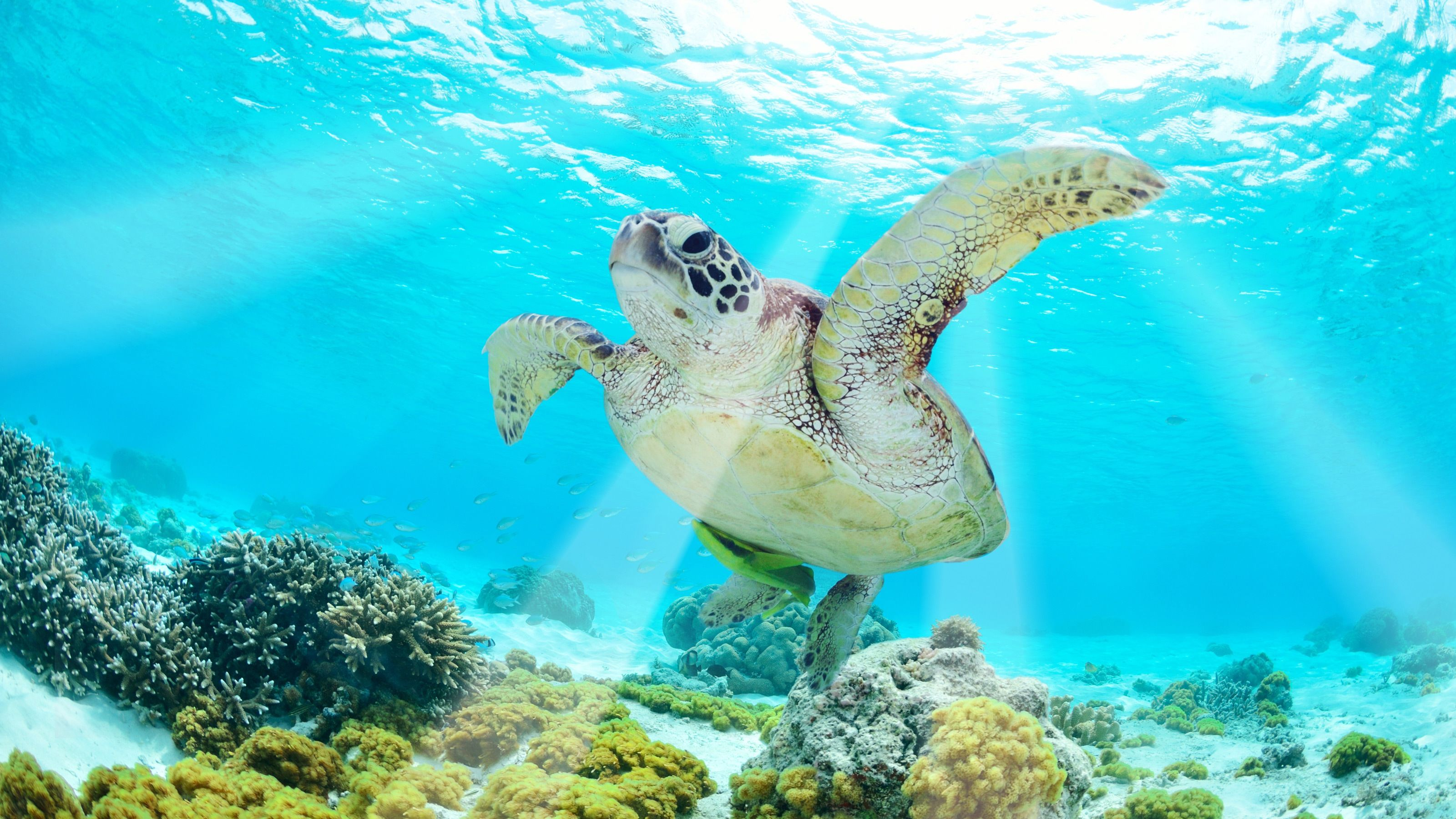 underwater scene with turtle in bahamas