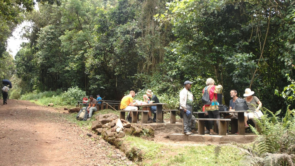 Picnicking group eating on tables next to a path at Mount Kilimanjaro National Park in Tanzania