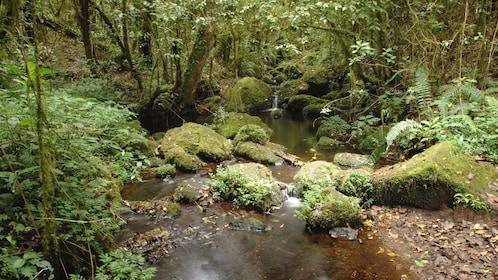 A babbling brook running through moss-covered rocks at Mount Kilimanjaro National Park in Tanzania