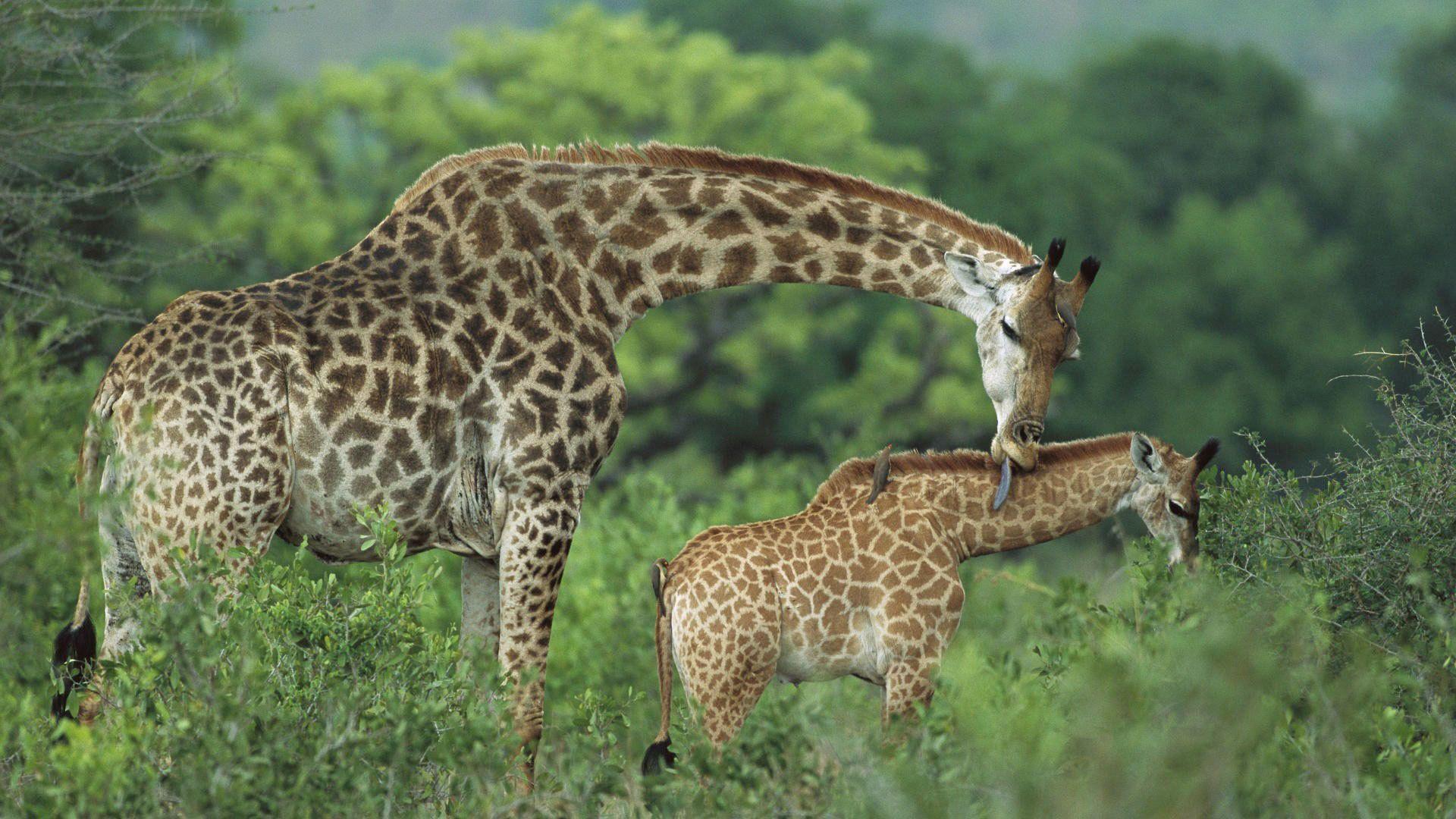 Arusha National Park Tour