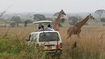Nairobi National Park Half-Day Tour